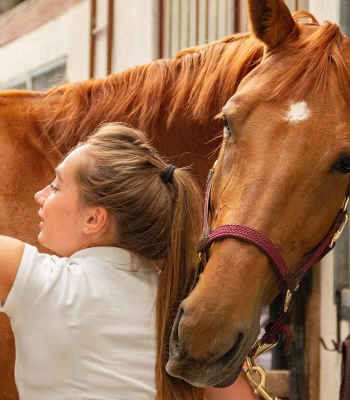 5 produse pentru ingrijirea cailor