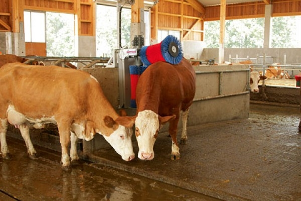 Ingrijirea Pielii la Vaci
