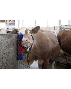 Perie de scarpinat pentru vitei si capre Kerbl