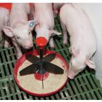 Hranitori Porci