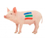 Marcare Porci